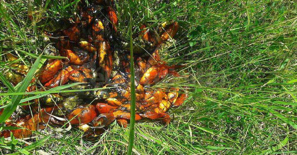 Preocupaci n en el tr bol por muerte masiva de peces for Vivero el estanque
